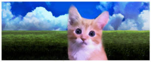 grass-and-skyand-kitty2