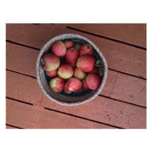 apple-basket2