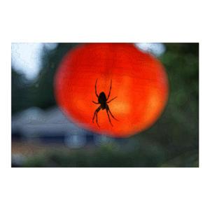 spider-lantern