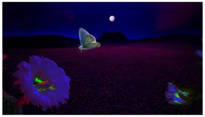 desert-moth