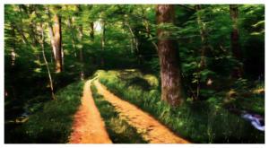 woods-road3